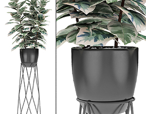 3D model Plant in Pot Flowerpot Exotic Plant palm
