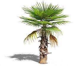 3D model Palm tree 4 - photoscan