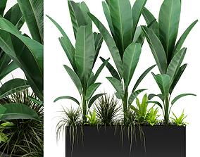 Plants collection 150 3D model