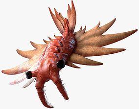 Anomalocaris Canadensis Static 3D model