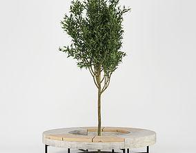 3D model Tree Flowerbed