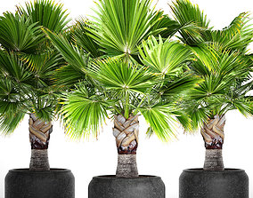 tropical green Palm tree 3D model