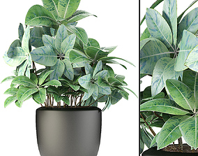 Plant in Pot Flowerpot Exotic Plant 3D pots