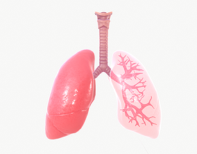 3D Respiratory System