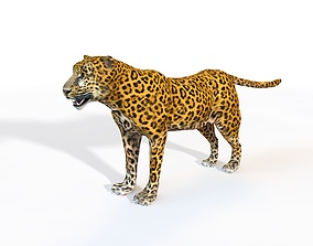 3D Leopard Rigged