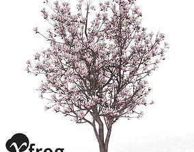 3D model XfrogPlants Saucer Magnolia 1