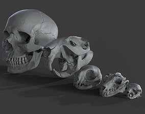 Scanned Skulls Various 3D