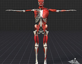3D Human Muscle And Bone Structure