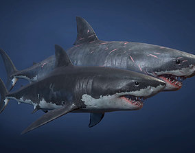 3D asset Great White Shark - Game Ready