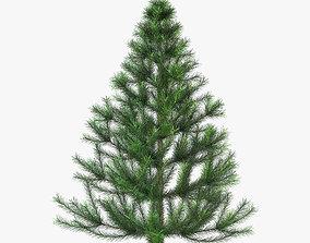 3D Conifer Tree 150cm v 1