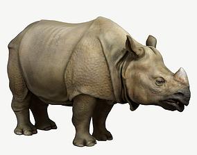 Indian Rhinoceros 3D asset