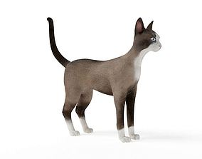 Brown And White Cat 3D model