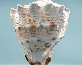 Shell Brown 3D model