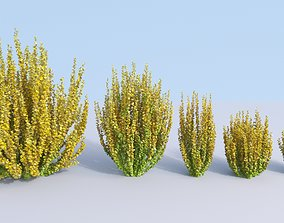 3D model 5 Japanese barberry Berberis thunbergii golden