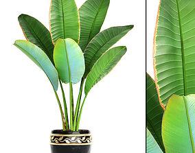 Ravenala palm 4 3D model