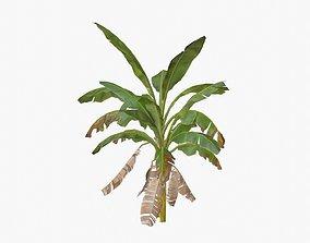 3D model animated Banana Tree