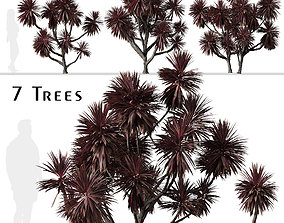 Set of Cordyline australis Or Cabbage Trees - 7 Trees 3D