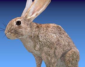 Animated Rabbit 3D asset