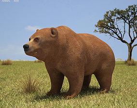 Grizzly Bear Ursus Arctos Horribilis 3D model