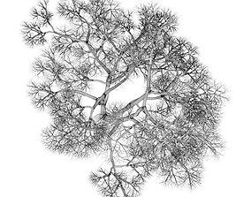 English Oak 8M Winter 3D