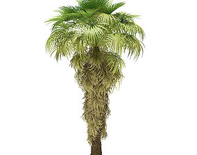 California Palm Tree 3D Model 8m