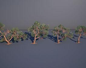 3D asset Juniper Tree
