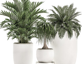 3D model Plants in a white flowerpot for decor and 2