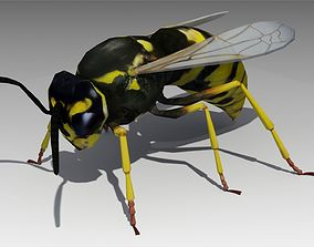 Wasp Animated 3D asset