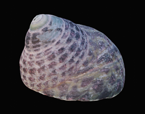 3D model Tessellate Nerita Sea Shell