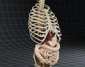 3D model Anatomy Digestive System