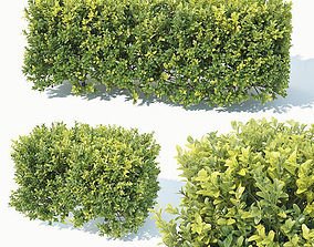 park 3D model Buxus Sempervirens Nr5 hedge 50cm