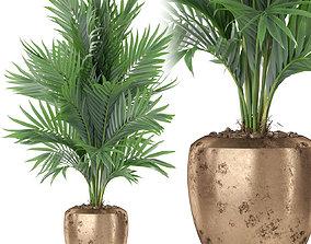 Plants collection 401 3D