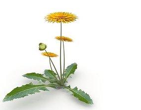 3D model dandelion flower plant