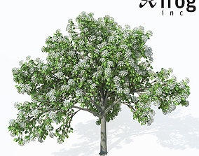 3D model XfrogPlants Wild Service Tree
