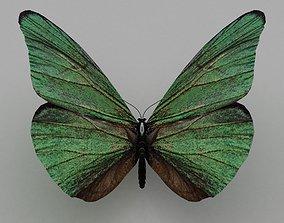 butterfly 3D flutter
