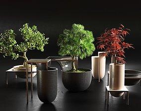 Bonsai Trees in Pots 3D model