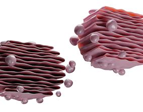 CELL PLANT 3D asset