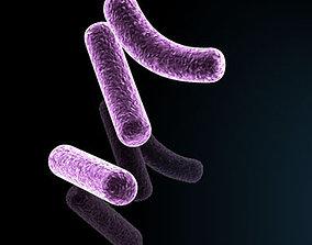 3D model Bacillus bacteria