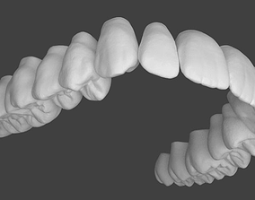 3D Upper jaw teeth anatomy