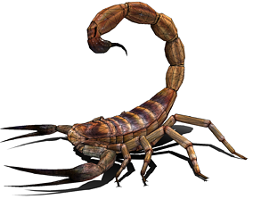 Scorpion High Quality 3D asset