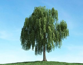 3D Weeping Willow Tree