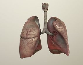 Human Lungs Animated 3D asset
