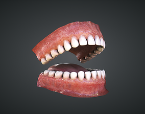 3D model game-ready Teeth