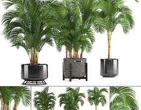 Collection of decorative palms 3D model