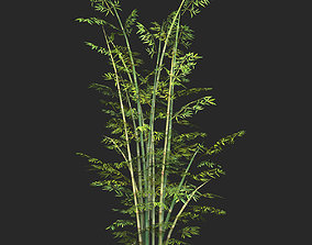 3D asset Game Ready Bamboo Tree 03