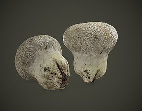 fungi Mushroom Scanned 3dModel low-poly