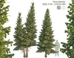 3D model Siberian spruce Picea obovata 4m and 5m