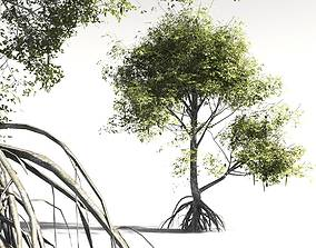 3D EVERYPlant Red Mangrove 16 -- 7 Models