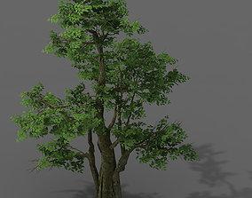 Plant - banyan tree 06 3D