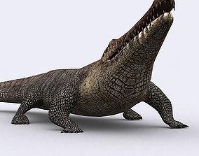 animated VR / AR ready 3DRT - Crocodile